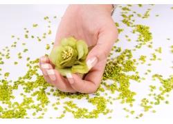 手握绿色花朵的美女手
