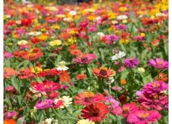 美丽鲜花风景