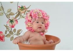 花盆里的宝宝