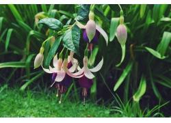 美丽花卉植物