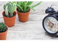 桌子上的仙人掌钟表摄影