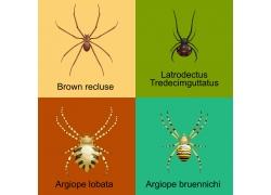 不同品种的蜘蛛合集