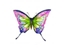 彩色的卡通蝴蝶