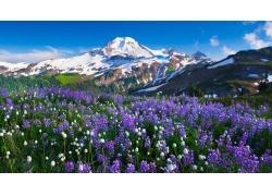 雪山鲜花草地风景