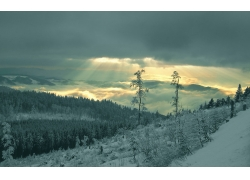 高山树林雪景