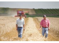 农业男人稻子收割机