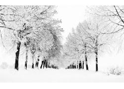 冬天林间道路雪景