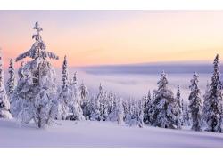 冬天雪地雪景