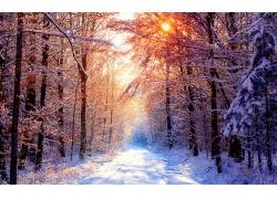 冬日树林雪景
