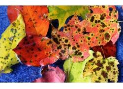 秋季枯黄的树叶