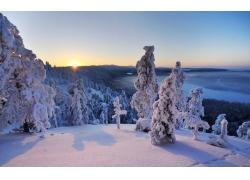 冬季树林雪景