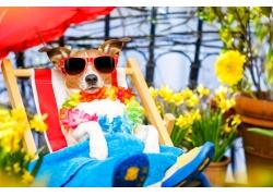 鲜花和椅子狗