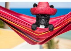 红色帽子黑狗