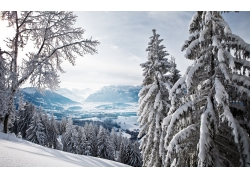冬天森林雪景