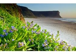海岸花卉植物