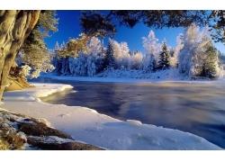 小河树林雪景