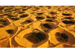 鸟瞰沙漠绿洲