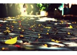 道路上的树叶