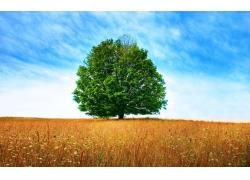 草地上的小树