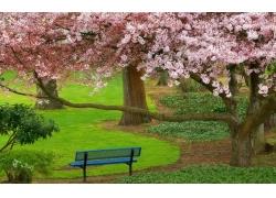 公路草地与大树