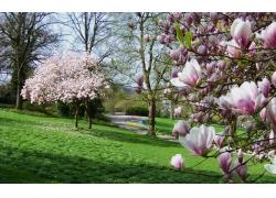 公园草地与大树