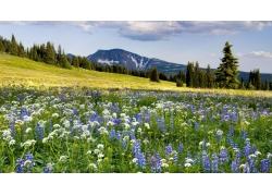 天空下的山坡与草地