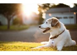 趴在草地上的宠物