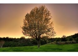 草地树木风景