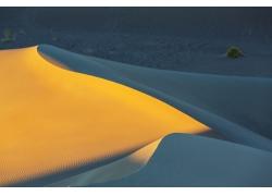 沙漠沙丘上的植物