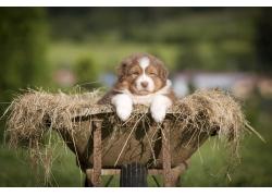 枯草里的狗