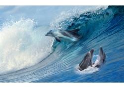 海豚浪花背景墙