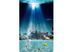 阳光礁石海鱼背景墙