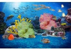 珊瑚海鱼背景墙