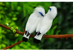 一对白色的飞鸟