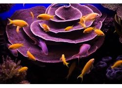 水底的金色鱼类