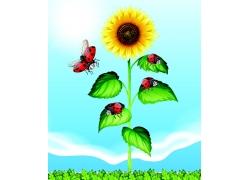向日葵上的瓢虫
