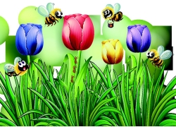 郁金香与蜜蜂