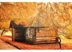 黄色树叶和木房子
