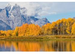 山前的黄色树林摄影