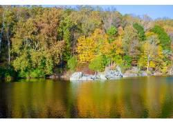 水边的茂密树林摄影