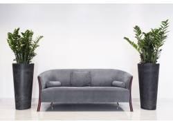 沙发边上的植物