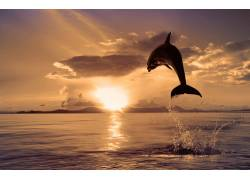 夕阳下跳出水面的海豚