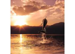 夕阳下的海豚