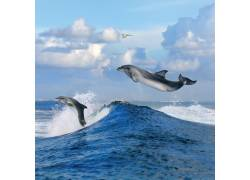海面上的海豚
