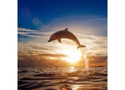 夕阳下的大海与海豚