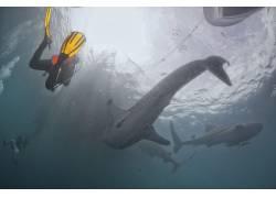 潜水员与海豚