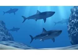 蓝色大海里的鱼