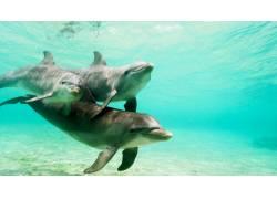 游玩的海豚