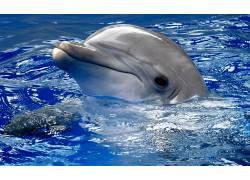 水面上的海豚