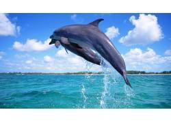 蓝天下的大海与海豚